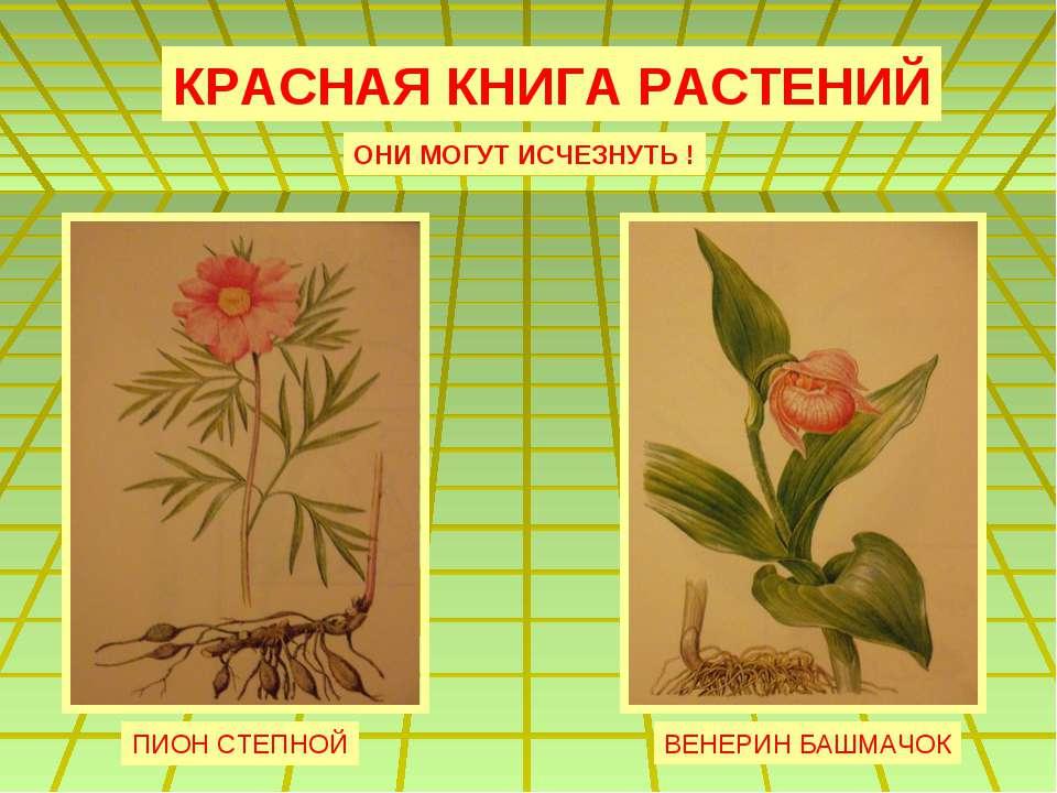 растения красной книги картинки с описанием как рисовать этом