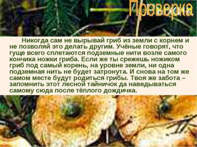 Никогда сам не вырывай гриб из земли с корнем и не позволяй это делать другим...
