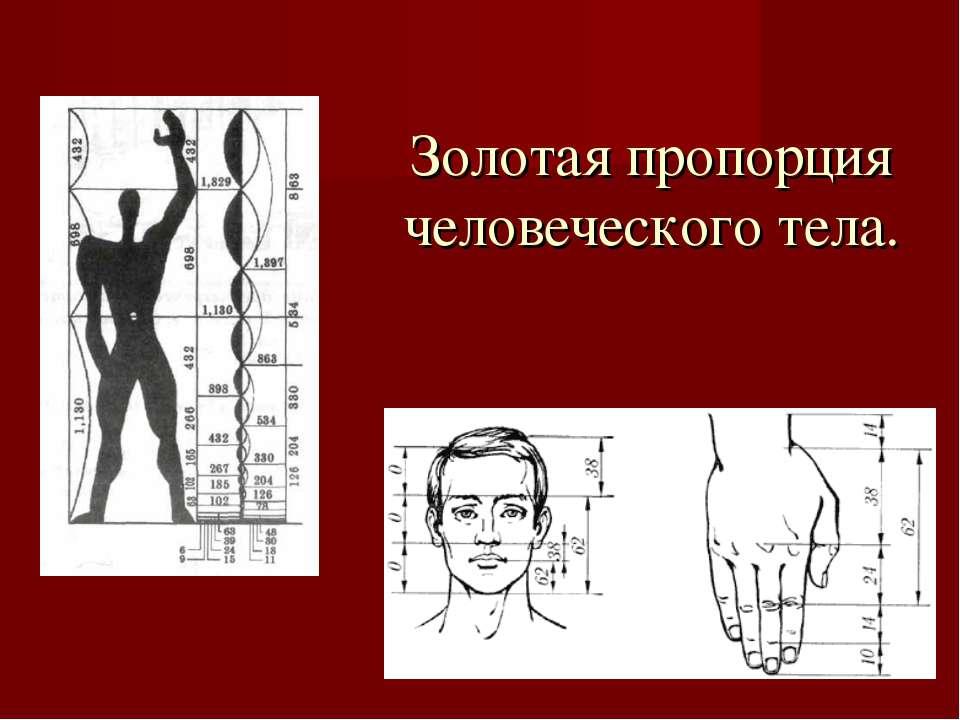Золотая пропорция человеческого тела.