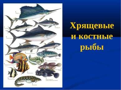 Хрящевые и костные рыбы