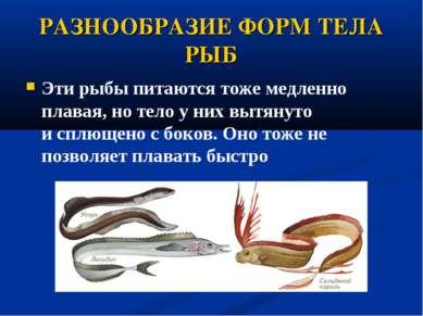 РАЗНООБРАЗИЕ ФОРМ ТЕЛА РЫБ Эти рыбы питаются тоже медленно плавая, но тело у ...