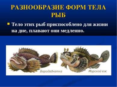 РАЗНООБРАЗИЕ ФОРМ ТЕЛА РЫБ Тело этих рыб приспособлено дляжизни на дне, плав...
