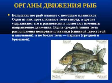 ОРГАНЫ ДВИЖЕНИЯ РЫБ Большинство рыб плавает с помощью плавников. Одни из них ...