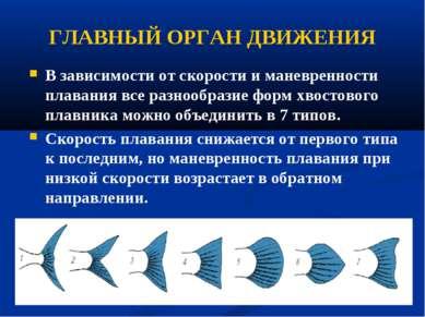 ГЛАВНЫЙ ОРГАН ДВИЖЕНИЯ В зависимости от скорости и маневренности плавания все...