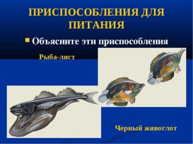 ПРИСПОСОБЛЕНИЯ ДЛЯ ПИТАНИЯ Объясните эти приспособления Рыба-лист Черный живо...