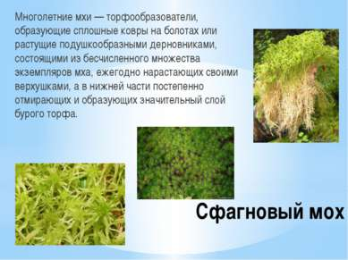 Сфагновый мох Многолетние мхи — торфообразователи, образующие сплошные ковры ...