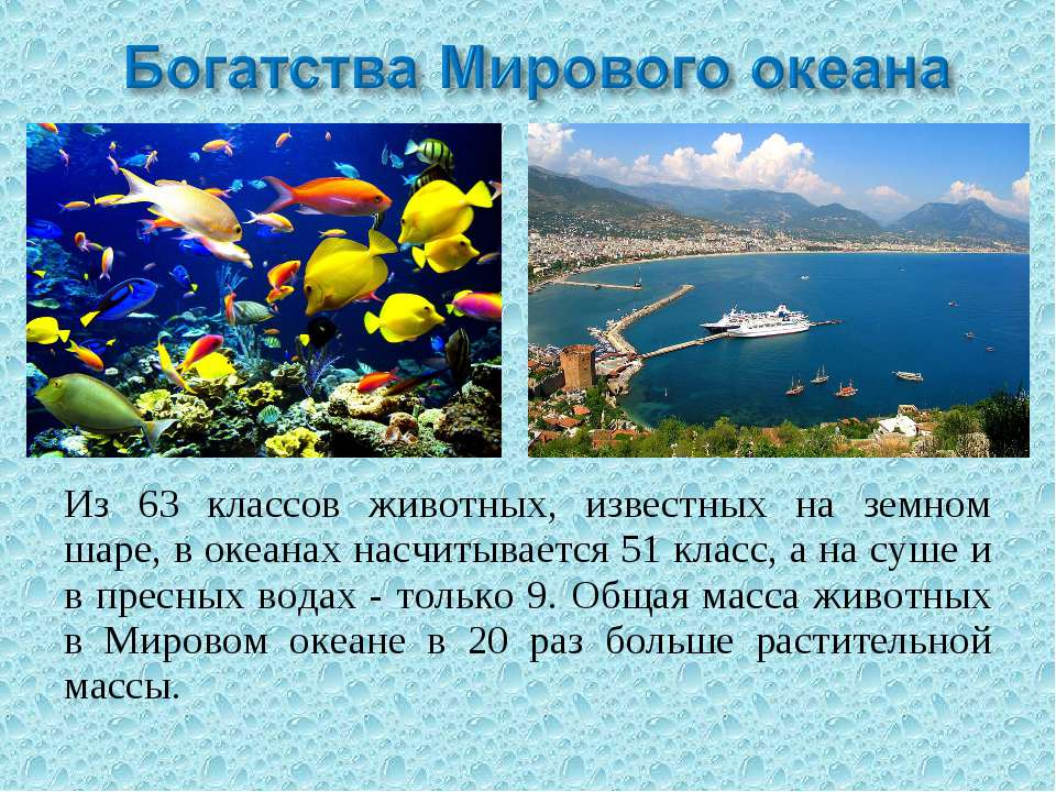 Из 63 классов животных, известных на земном шаре, в океанах насчитывается 51 ...