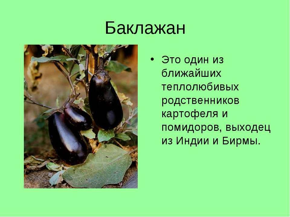 Баклажан Это один из ближайших теплолюбивых родственников картофеля и помидор...