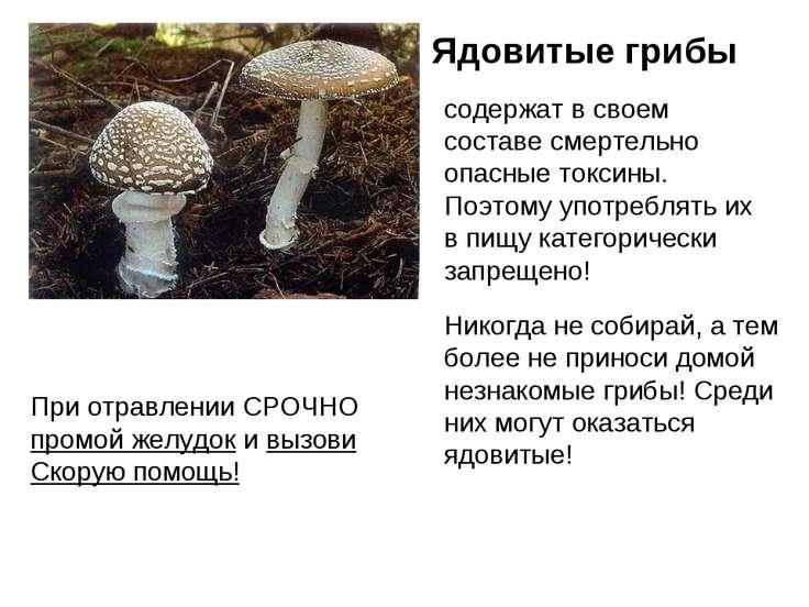 При отравлении СРОЧНО промой желудок и вызови Скорую помощь! Ядовитые грибы с...