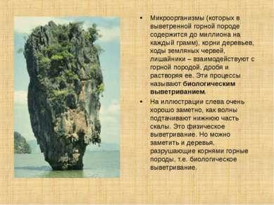 Микроорганизмы (которых в выветренной горной породе содержится до миллиона на...