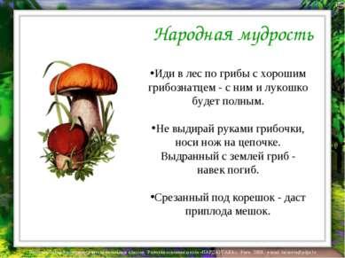 Народная мудрость Иди в лес по грибы с хорошим грибознатцем - с ним и лукошко...
