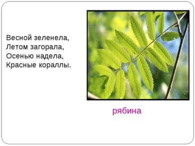 рябина Весной зеленела, Летом загорала, Осенью надела, Красные кораллы.