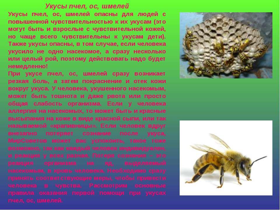 Укусы пчел, ос, шмелей Укусы пчел, ос, шмелей опасны для людей с повышенной ч...