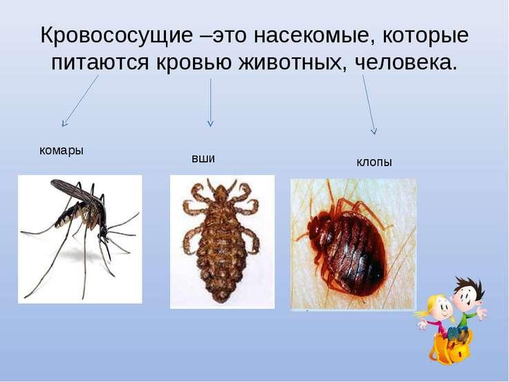 Кровососущие –это насекомые, которые питаются кровью животных, человека. кома...
