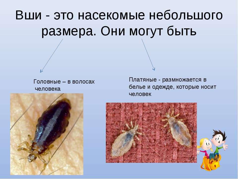 Вши - это насекомые небольшого размера. Они могут быть Головные – в волосах ч...