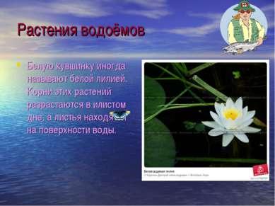 Растения водоёмов Белую кувшинку иногда называют белой лилией. Корни этих рас...