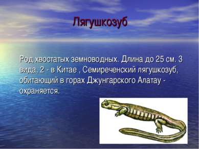 Лягушкозуб Род хвостатых земноводных. Длина до 25 см. 3 вида, 2 - в Китае , С...