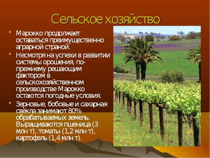 Сельское хозяйство Марокко продолжает оставаться преимущественно аграрной стр...