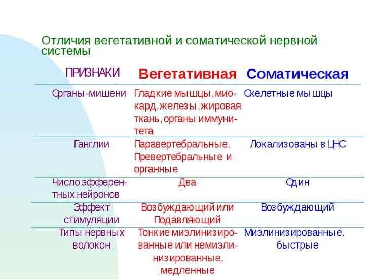Отличия вегетативной и соматической нервной системы