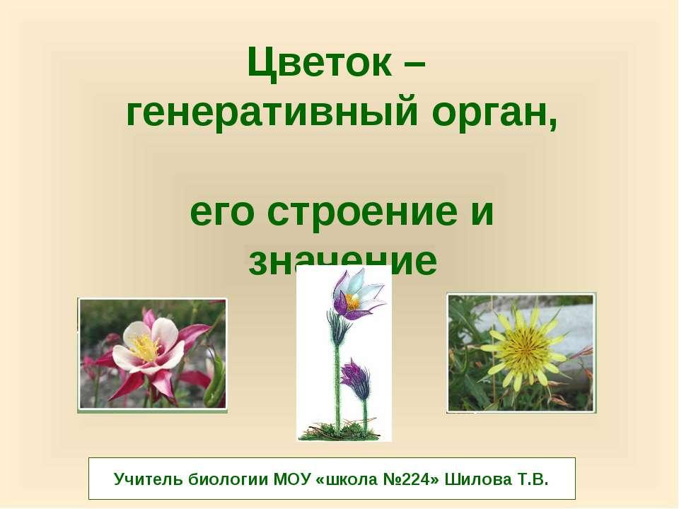 Цветок – генеративный орган, его строение и значение Учитель биологии МОУ «шк...