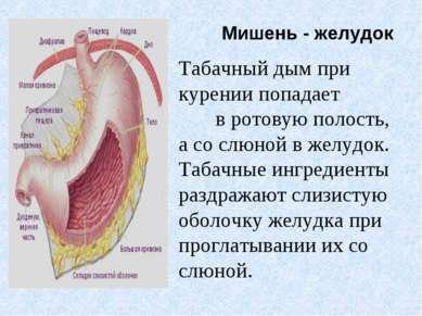 Мишень - желудок Табачный дым при курении попадает в ротовую полость, а со сл...