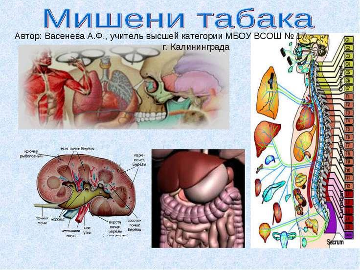 Автор: Васенева А.Ф., учитель высшей категории МБОУ ВСОШ № 17 г. Калининграда