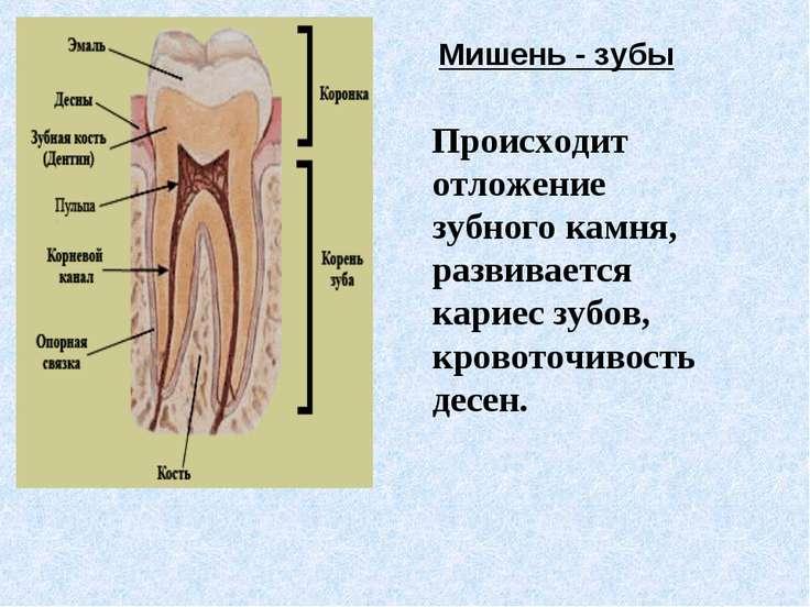 Мишень - зубы Происходит отложение зубного камня, развивается кариес зубов, к...