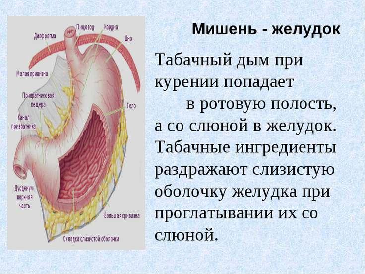 Курение вредит желудку