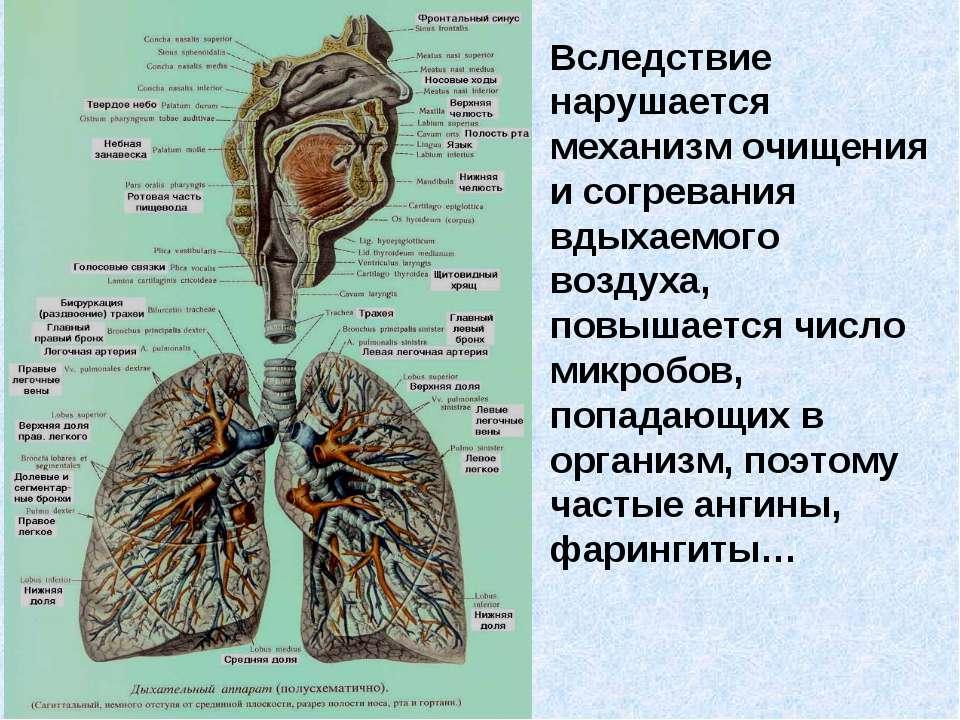 Вследствие нарушается механизм очищения и согревания вдыхаемого воздуха, повы...