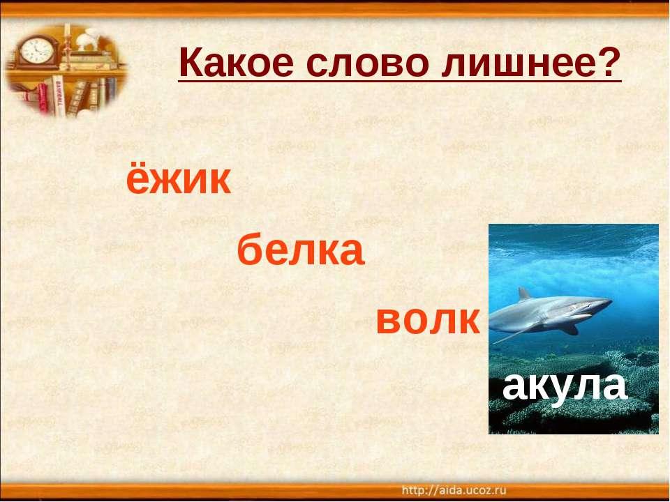 Какое слово лишнее? ёжик белка волк акула