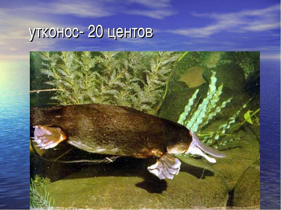 утконос- 20 центов