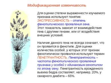 Модификационная изменчивость Для оценки степени выраженности изучаемого призн...
