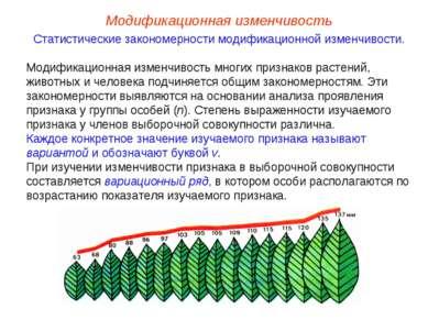 Модификационная изменчивость Статистические закономерности модификационной из...