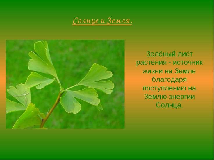 Солнце и Земля. Зелёный лист растения - источник жизни на Земле благодаря пос...