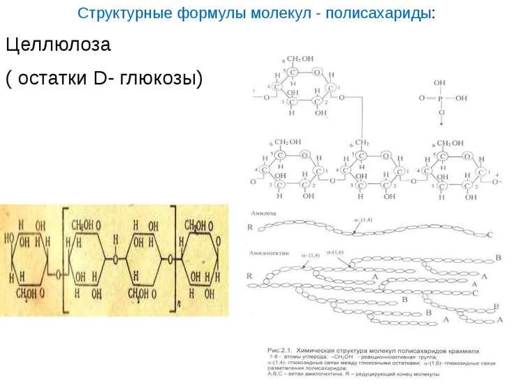 Структурные формулы молекул - полисахариды: Целлюлоза ( остатки D- глюкозы) к...