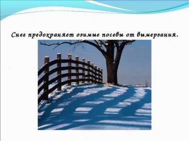 Снег предохраняет озимые посевы от вымерзания.