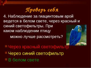4. Наблюдение за гиацинтовым арой ведется в белом свете, через красный и сини...