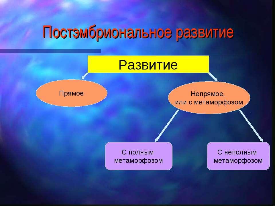 Постэмбриональное развитие Развитие Прямое Непрямое, или с метаморфозом С пол...
