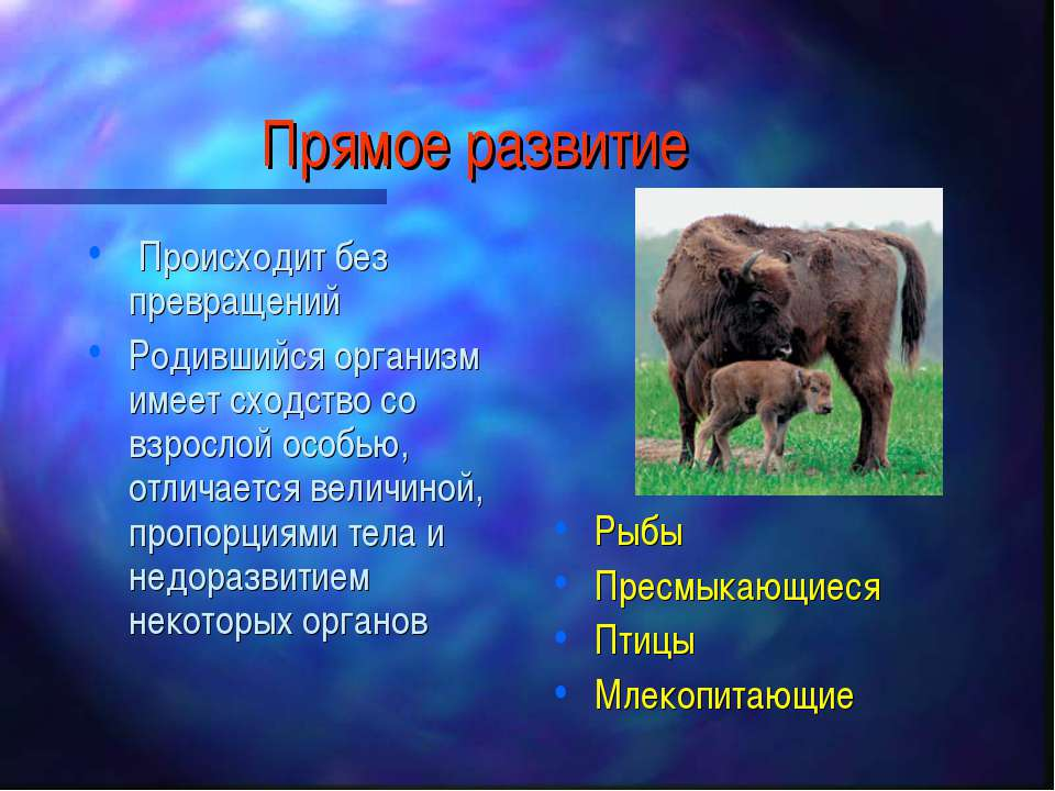 Прямое развитие Происходит без превращений Родившийся организм имеет сходство...