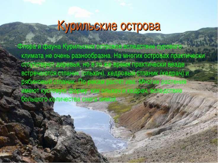 Курильские острова Флора и фауна Курильских островов вследствие сурового клим...