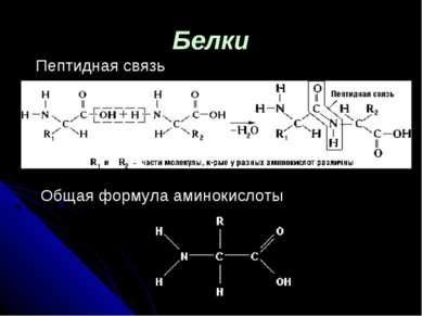 Белки Пептидная связь Общая формула аминокислоты