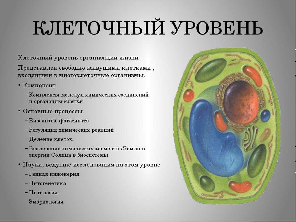 КЛЕТОЧНЫЙ УРОВЕНЬ Клеточный уровень организации жизни Представлен свободно жи...