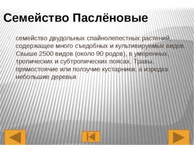 Представители Перец Болгарский Картофель Помидор (Томат) Белена Черная