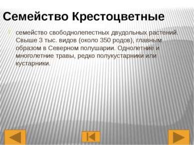Представители Капуста Редька Черная Редис Редька Дикая