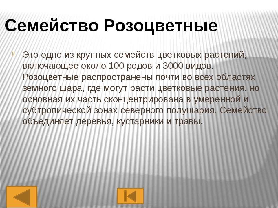 Представители Одуванчик Ромашка Подсолнечник Астра