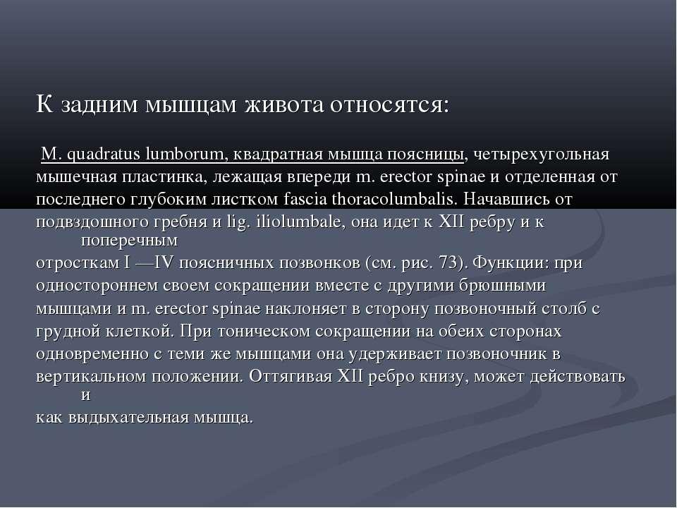 К задним мышцам живота относятся: М. quadratus lumborum, квадратная мышца поя...