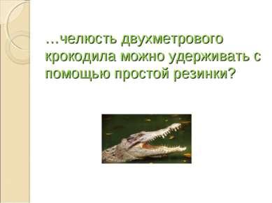 …челюсть двухметрового крокодила можно удерживать с помощью простой резинки?