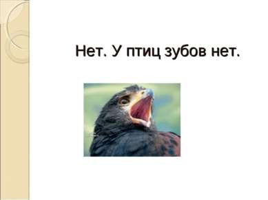 Нет. У птиц зубов нет.