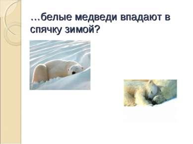 …белые медведи впадают в спячку зимой?