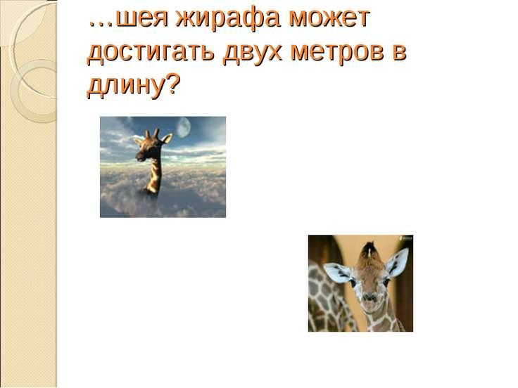 …шея жирафа может достигать двух метров в длину?